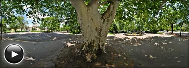 Öreg platánfa a Városligetben, Budapest